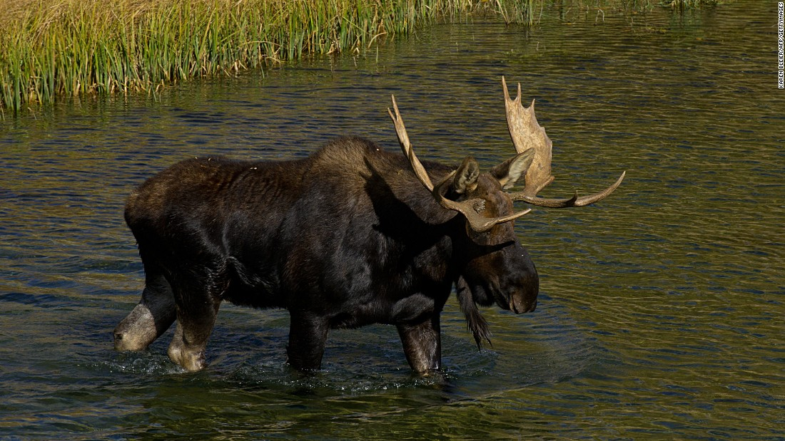 Alaska moose hunter can 'rev up his hovercraft,' Supreme Court rules