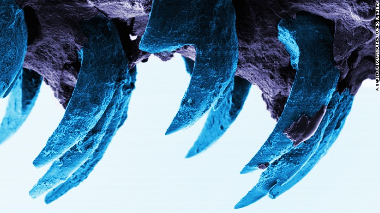Is this toothy material nature's strongest?