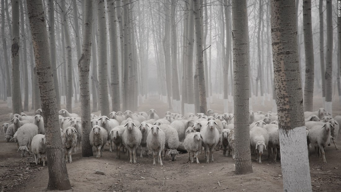 Even though equipping animals with WiFi hotspots has been part of the discussion, sheep would not make for great service providers, as they tend to flock together.