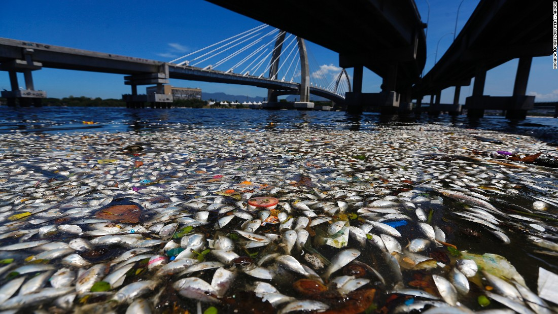 Dead fish are seen in the Guanabara Bay in Rio de Janeiro on Tuesday, February 24. International Olympic Committee members will decide if its waters are acceptable for the sailing events in 2016, the state's governor said on Monday.