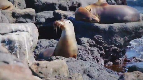 cnn trailer promo wonder list galapagos_00001620
