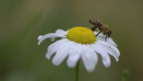Why are all the bees dying?