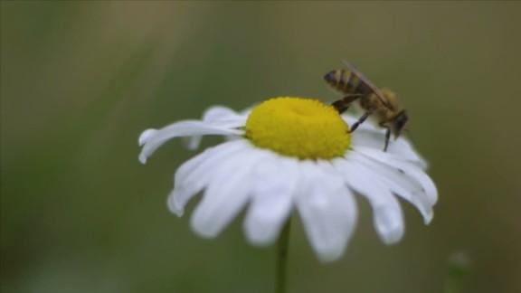 orig inside man morgan spurlock bees_00002408.jpg
