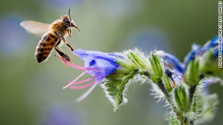 5 ways to help save the bees