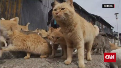 Welcome to Japan's 'Cat Island'
