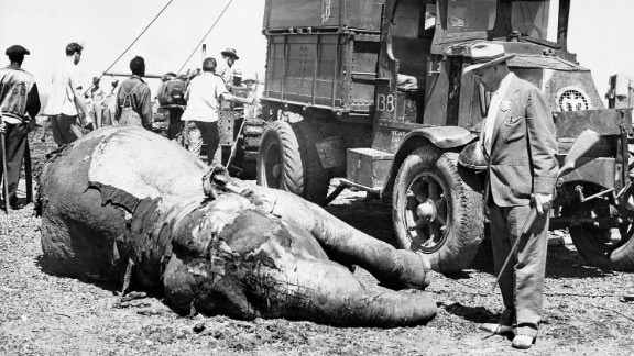 Detective inspector Frank Story, right, euthanized this circus elephant after it was badly burned in a fire at the Ringling Bros. show grounds in Cleveland in August 1942.