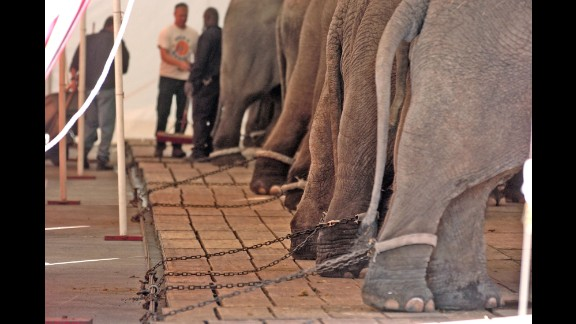 This January 2005 photo, provided by the Animal Protection Institute, shows circus elephants chained in Jacksonville, Florida. Feld Entertainment Inc., which produces the Ringling Bros. and Barnum & Bailey Circus, agreed to pay $270,000 for allegedly violating the Animal Welfare Act on several occasions from June 2007 to August 2011, according to a 2011 news release from the U.S. Department of Agriculture. As part of the settlement, the company admitted no wrongdoing or violation of USDA policy.