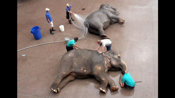 Animal handlers bathe and brush two elephants in Phoenix in July 2006.