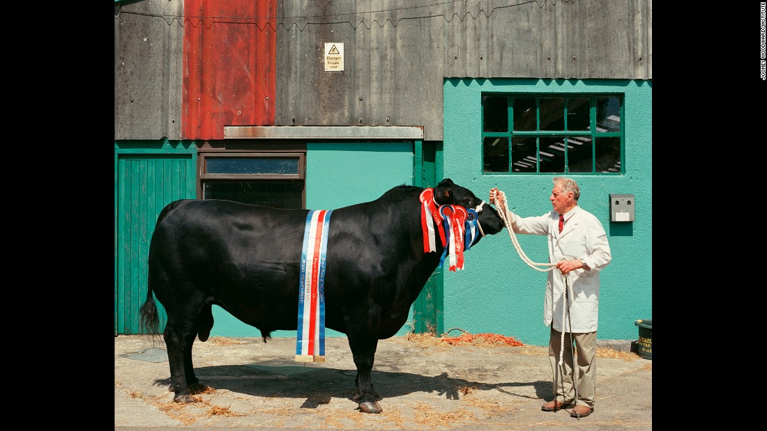 Colin displays his Aberdeen Angus bull named Kings Brompton Endeavour.