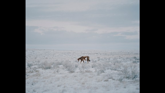 A horse walks in the snow in Newtown, Montana.