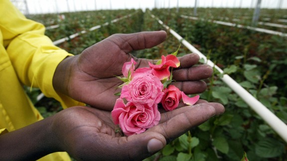 The Kenya Flower Council says that an estimated 500,000 people, including more than 90,000 flower farm employees, depend on the country