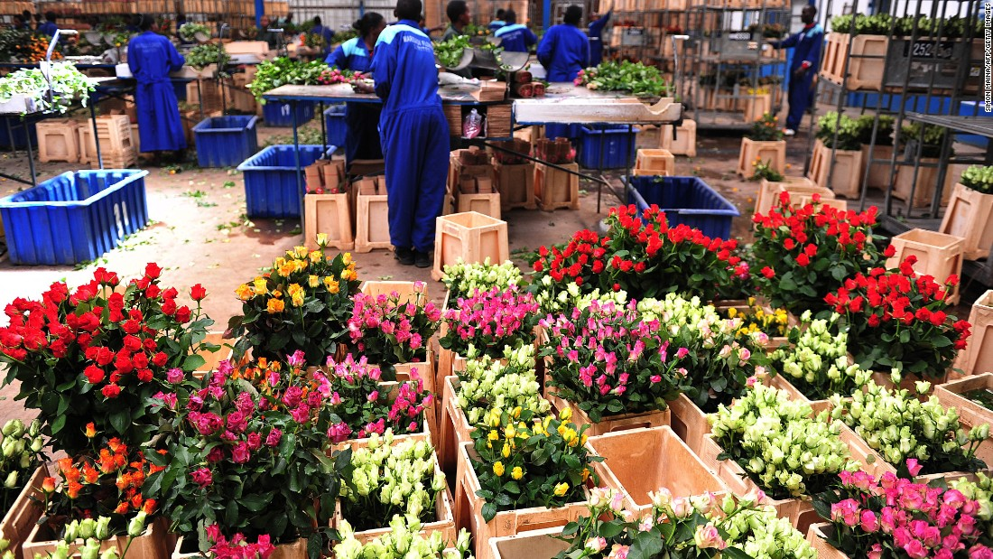 Roughly 50% of Kenya's 127 flower farms are located around Lake Naivasha, some 90 kilometers northwest of the Kenyan capital of Nairobi.