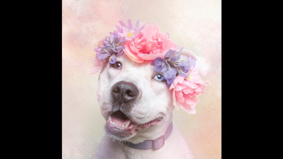 """Through pictures of Cali and her cohorts, Gamand hopes to change the way we look at pit bulls and """"renew the dialogue around these misunderstood dogs."""""""