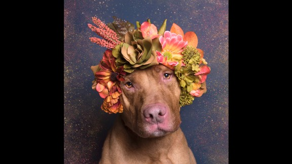 """Gamand creates the crowns for the dogs and brings them to shelters for the shoots. """"The dogs have been doing incredibly well wearing the crowns. Of course there is a lot of bribery involved!"""""""