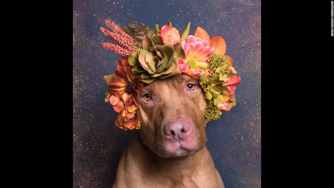 "Gamand creates the crowns for the dogs and brings them to shelters for the shoots. ""The dogs have been doing incredibly well wearing the crowns. Of course there is a lot of bribery involved!"""