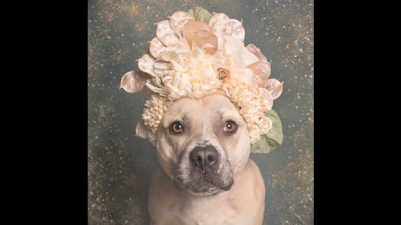 Images of Aphrodite and her friends from New York's  Sean Casey Animal Rescue have been spreading across social media after the shelter shared them on Facebook on March 12.