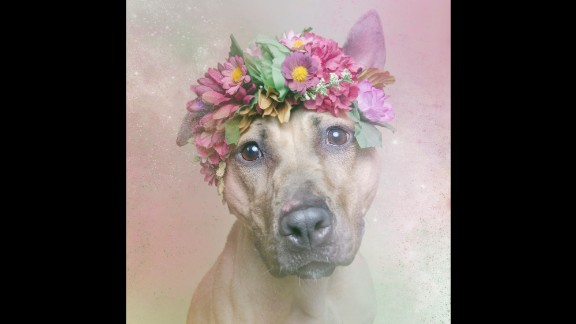 Gamand says she was not a fan of pit bulls after being attacked by a large dog as a child. Volunteering in a shelter and becoming an animal activist changed her attitude toward pit bulls, like Regina here