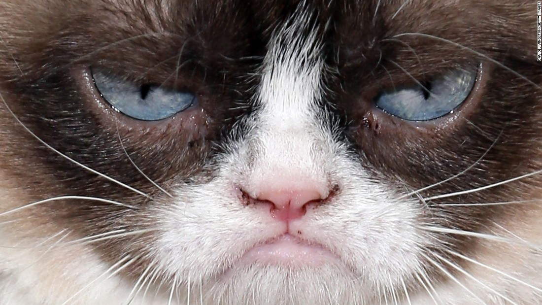 "<a href=""http://www.grumpycats.com/"" target=""_blank"">Grumpy Cat</a>, also known as Tardar Sauce, is perhaps the most well-known cat on the Internet. Celebrities as diverse as Anderson Cooper and Jennifer Lopez have taken pictures with her."