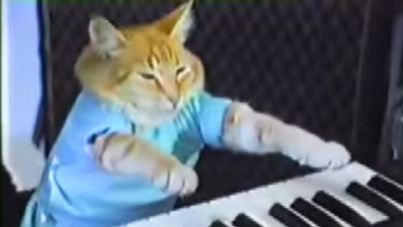Keyboard cat is an Internet meme.