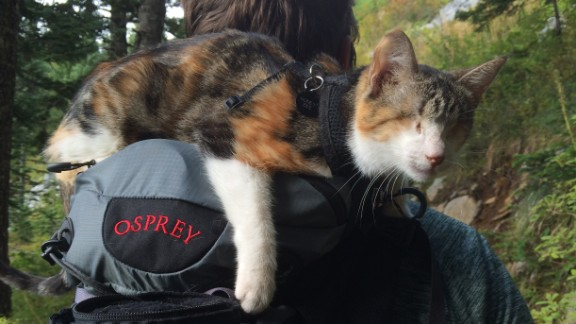 Honey Bee is a blind cat from Animals Fiji, an animal veterinary service. Here, Honey Bee rested on the backpack of Jonathan Ursin, husband of Sabrina Ursin, who took the photograph.