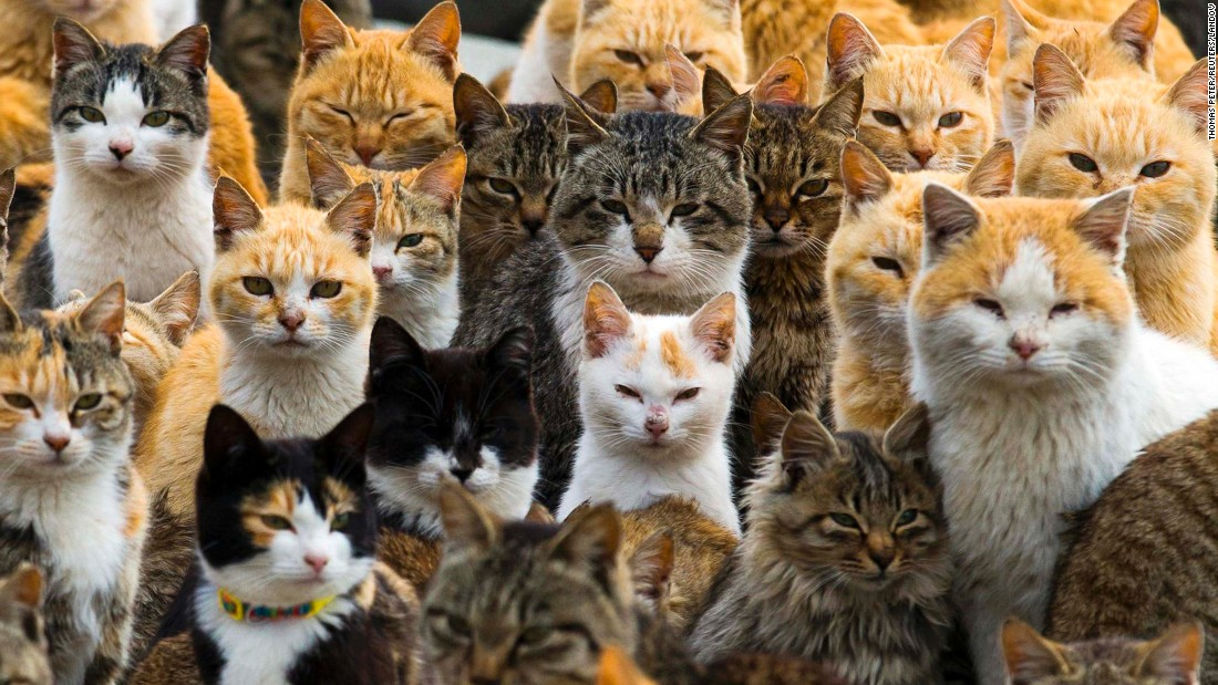 Cats at the harbor of Aoshima Island in the Miyazaki Prefecture in southern Japan on February 25. On this remote island, felines outnumber humans six to one.