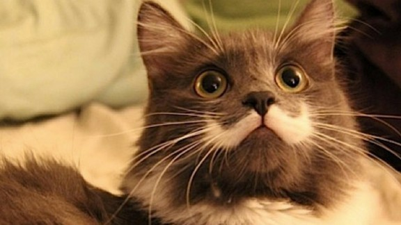 """Hamilton, dubbed the """"Hipster Cat,"""" has a white marking under his nose that looks like Salvador Dali"""