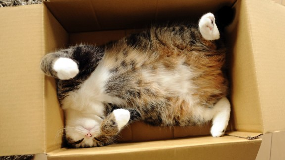 Maru, the cat sensation in Japan with millions of views for nearly 300 videos since 2007, has three books and a calendar, among other swag for sale.
