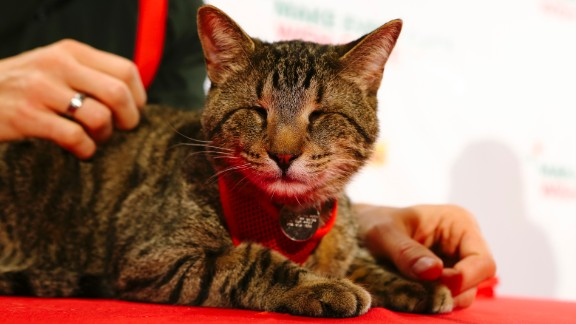 """Oskar the Blind Cat, along with other famous Internet cats, starred in a holiday music video """"Hard to Be a Cat at Christmas"""" in 2013."""