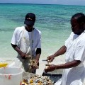islands turks and caicos conch irpt