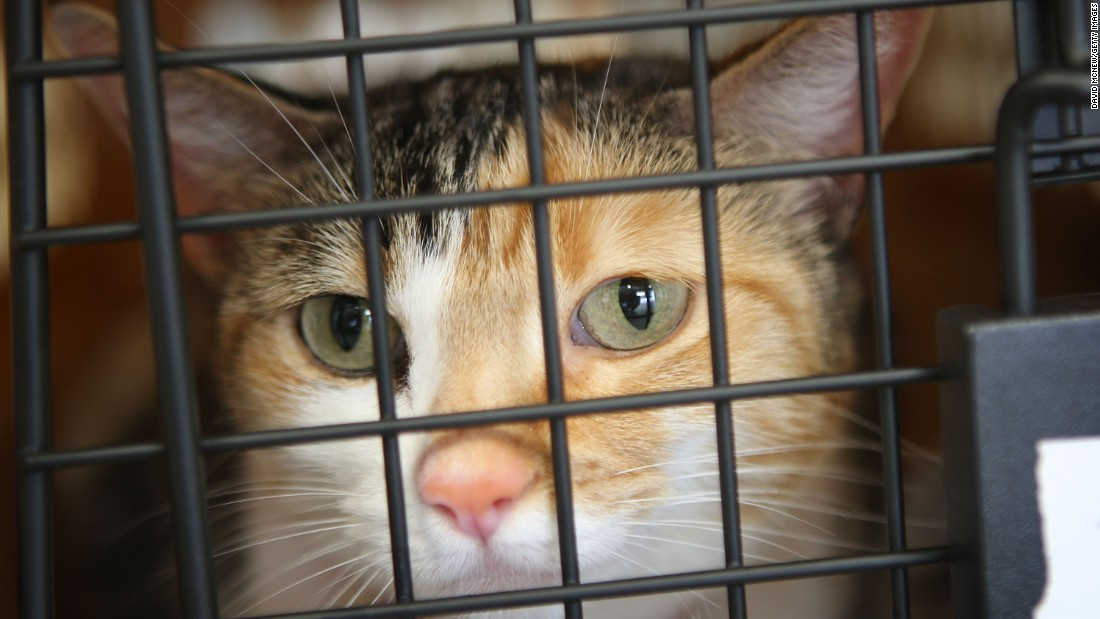 "<strong>Your pet.</strong> <a href=""http://www.united.com/web/en-US/content/travel/animals/in_cabin.aspx"" target=""_blank"">United Airlines</a> charges $125 each way for humans to bring their in-cabin pet in an approved kennel. Acceptable pets include domesticated cats, dogs, rabbits and birds (one per kennel, except birds, which may travel two to a kennel)."