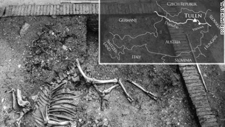 Excavations in the Austrian city of Tulln revealed a complete 17th century camel skeleton.