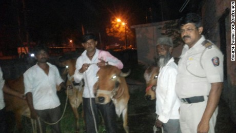 A resident of Maharashtra state complies with a police edict requiring all cattle owners to register their livestock, along with photos, with police.