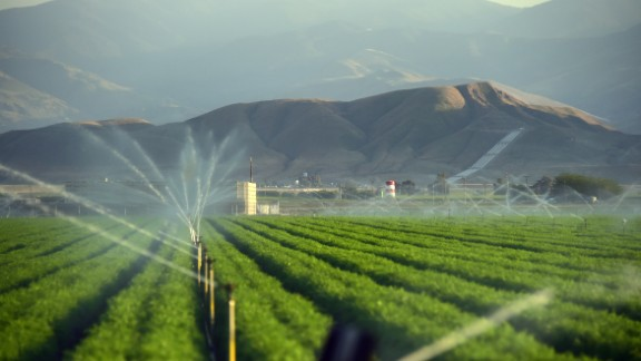 Fields of carrots are watered March 29, 2015 in Kern County, California.