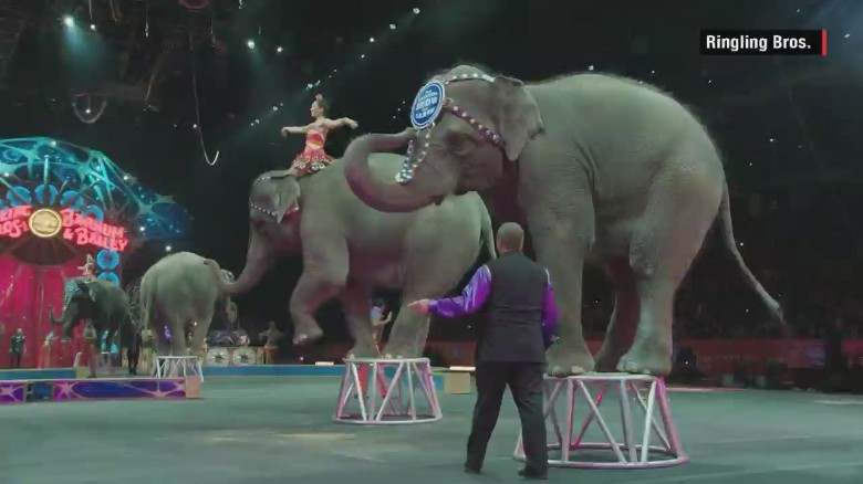 alina machado elephants retire ringling bros orig_00012514