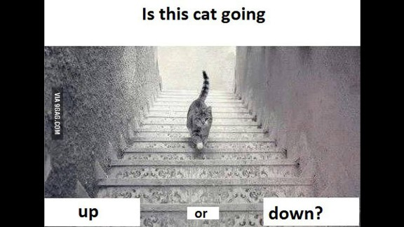 Is the cat going up or down the stairs? People on social media are debating which way the cat is walking. Depends on how you look at it, right? Here are some other optical illusions that can trick the eye.