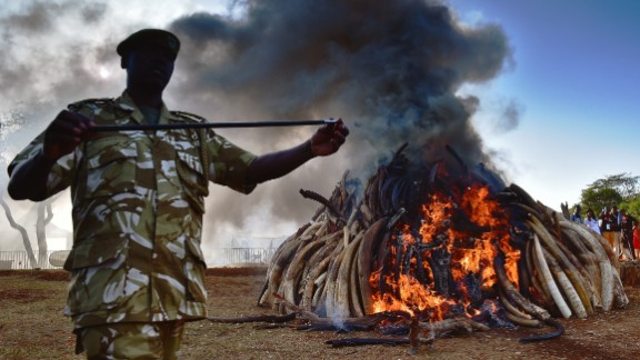 Kenyan officers burn 15 tons of ivory on March 3.