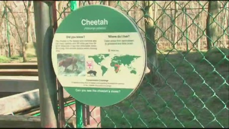 bts oh child falls into cleveland zoo cheetah exhibit_00005724.jpg