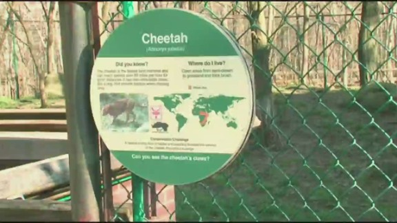 bts oh child falls into cleveland zoo cheetah exhibit_00005724.jpg