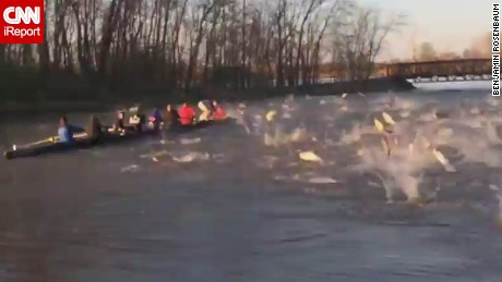 Rowers attacked by flying fish