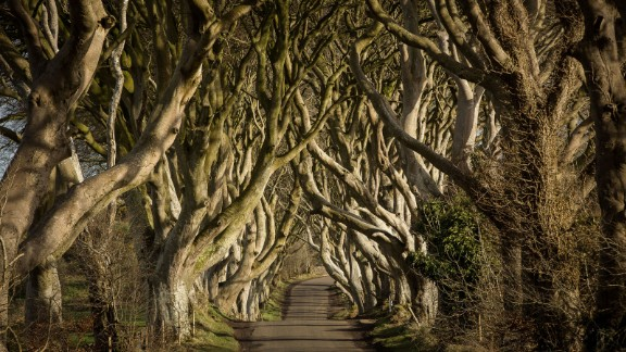 "This avenue of 18th-century beech trees in Stranocum, County Antrim, Northern Ireland, was the setting for a classic scene in ""Game of Thrones"" season two, when Ayra Stark flees King's Landing disguised as a boy."