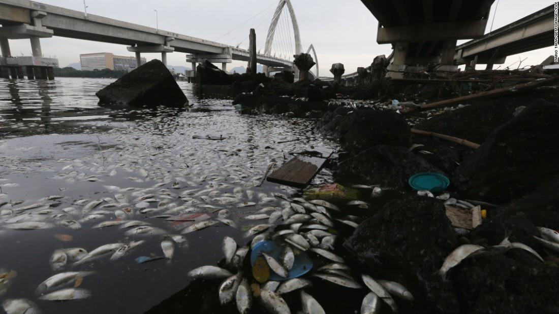 Fish deaths deepen Rio 2016 concerns