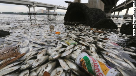 Dead fish float and rest on the edge of Guanabara Bay, a part of which is the Rio 2016 Olympic Games sailing venue, on February 25, 2015 in Rio de Janeiro, Brazil. The polluted bay receives a majority of the city's raw sewage and officials have recently admitted their cleanup goals won't be met in time for the Olympics