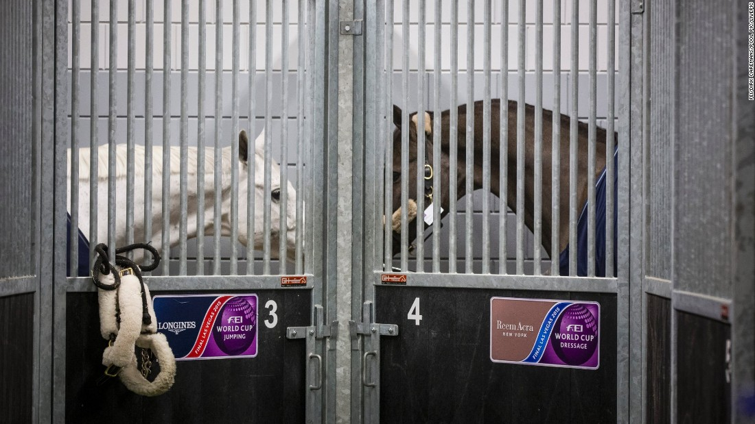 Horses are supervised by a vet while loading takes place. These two are as good as horses get: on the left, showjumping World Cup champion Cornet D'Amour. On the right, dressage Olympic, world, European, and World Cup champion Valegro.