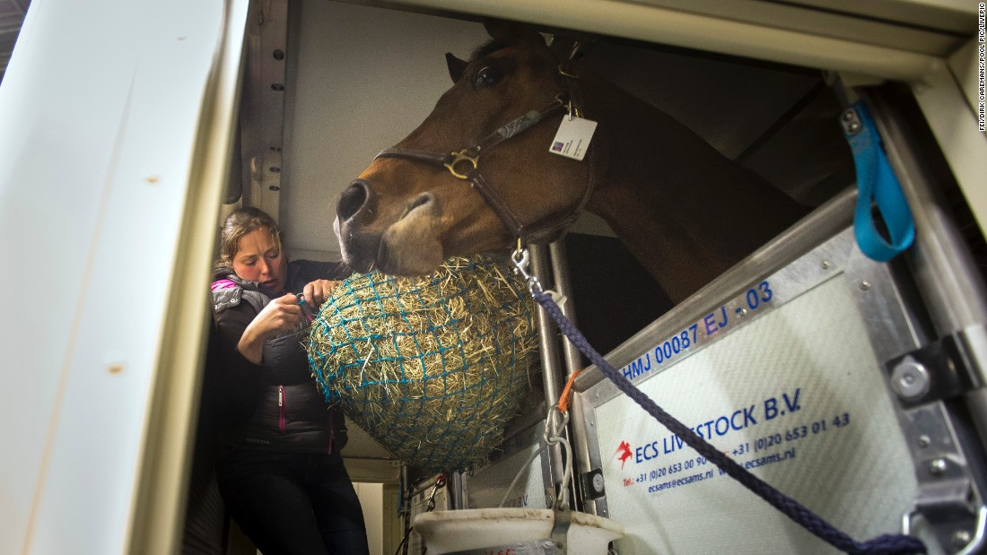 Tim Dutta, whose company organizes air travel for horses, says some are accustomed to flying and others are more wary. Here, Swiss rider Martin Fuchs' horse -- PSG Future -- gets a treat from groom Emma Uusi Simola.