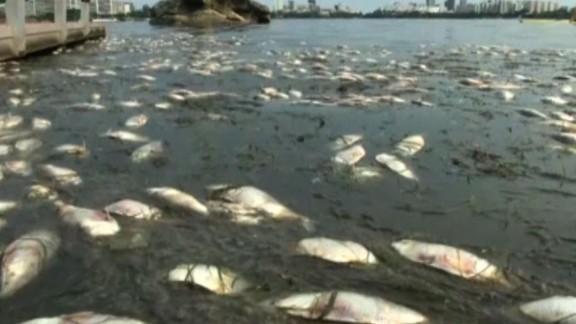 Dead fish have repeatedly washed up in Rodrigo de Freitas Lagoon in Rio de Janeiro.