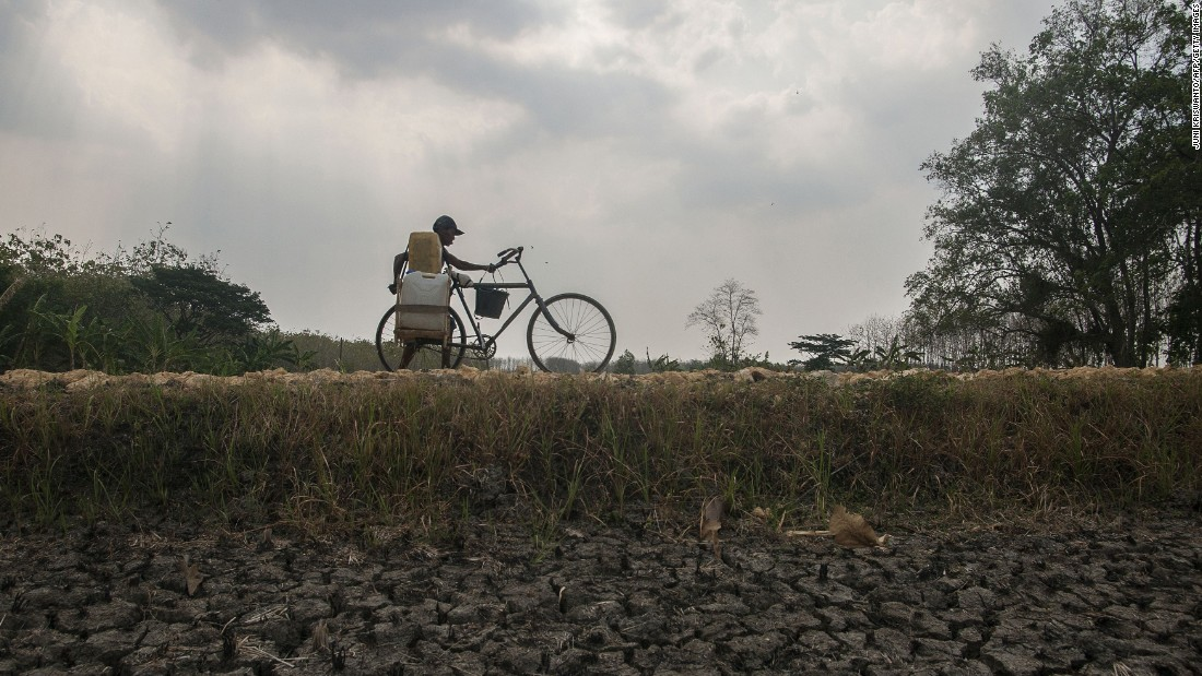 A resident pushes his bicycle carrying plastic containers filled with potable water along a dried up rice field in eastern Java, Indonesia, in October 2014.