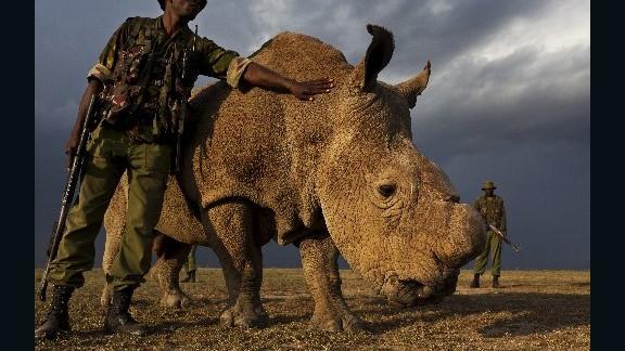 Ol Pejeta Conservancy photos of Rhino and Ranger