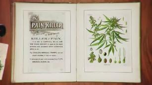 The quick hit history of medical marijuana