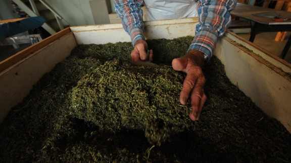 The marijuana produced at the University of Mississippi is then stored in a DEA-approved vault, ready to be used in federally approved studies.