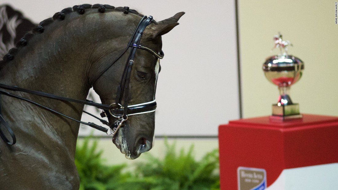 Defending champion Valegro -- the horse Dujardin rode to victory -- eyed up the silverware as the final got under way.